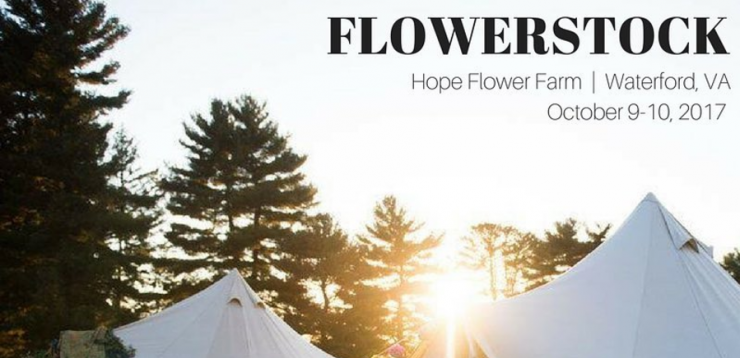 Flowerstock at Hope Farm